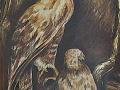 p1 buizerds 51cm x 71cm pastel